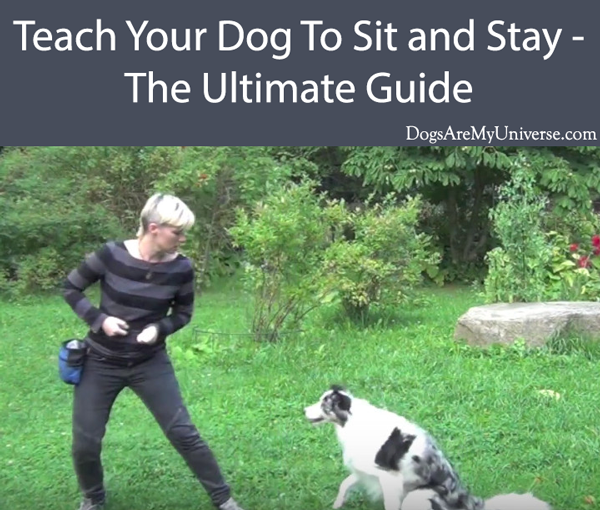 Teach Your Dog To Sit and Stay - The Ultimate Guide