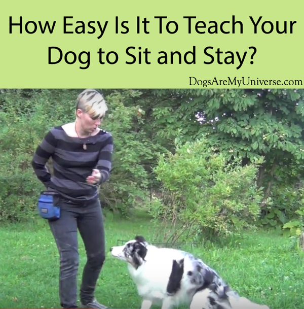 How Easy Is It To Teach Your Dog to Sit and Stay