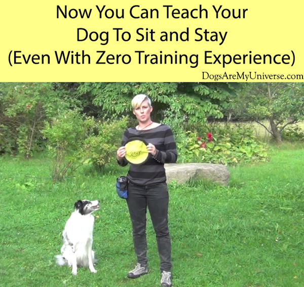 Now You Can Teach Your Dog To Sit and Stay (Even With Zero Training Experience)