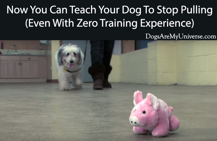 how to teach your dog to stop