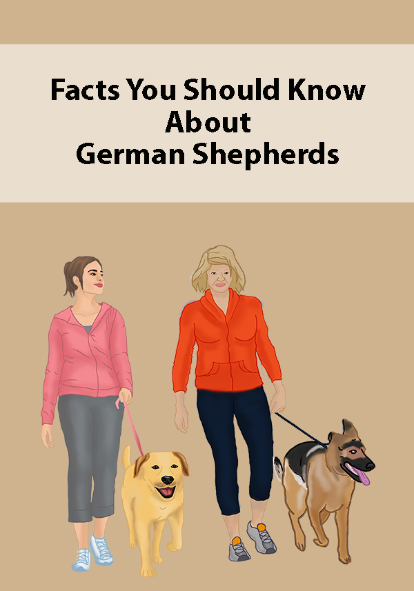 Facts You Should Know About German Shepherds