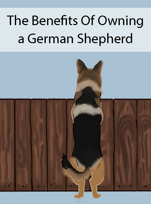 The Benefits Of Owning a German Shepherd