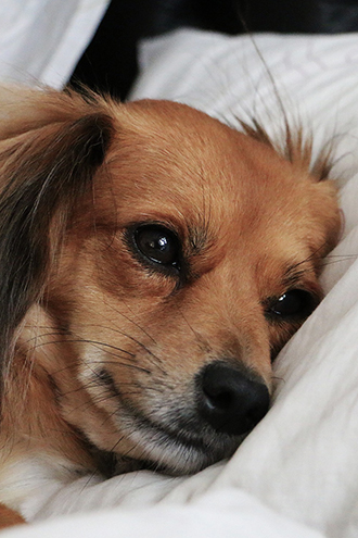 Why Isn't My Dog Sleeping At Night?