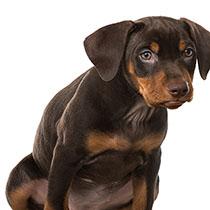 House Training An Adult Dog