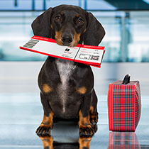 Taking Your Dog On A Plane