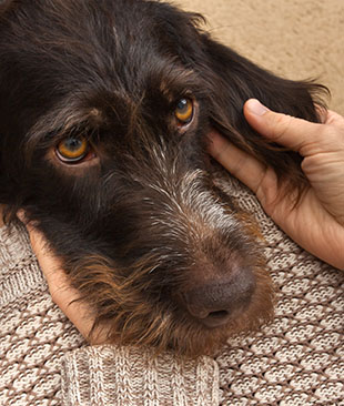 Tell Your Dog You Love Them In A Language They Understand