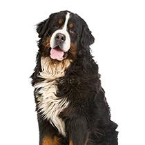 Why Are Dogs So Faithful