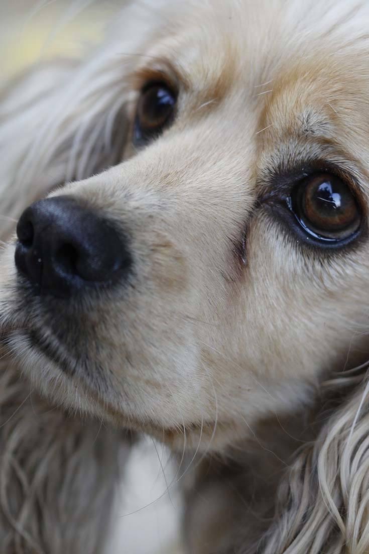 Can Dogs Sense Sadness?