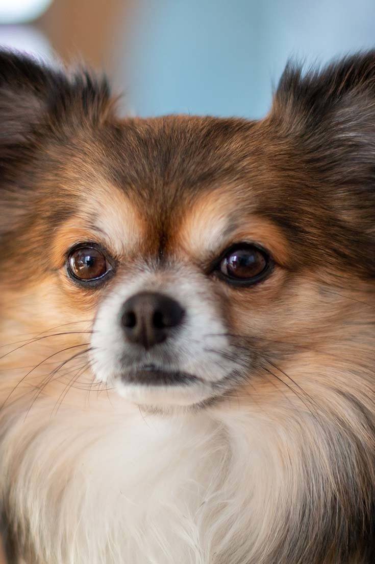 How Many Eyelids Do Dogs Have?