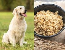 Is Quinoa Good For Dogs?