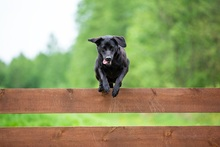 how to keep dog from jumping fence