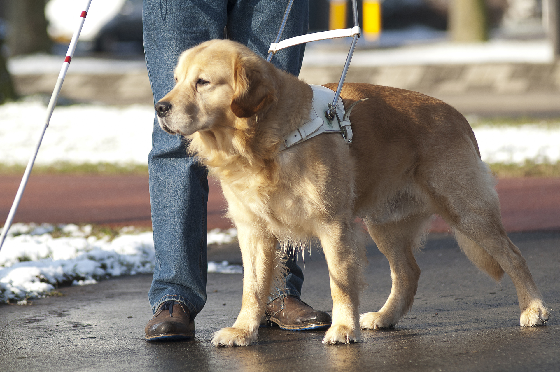 How To Register A Service Dog