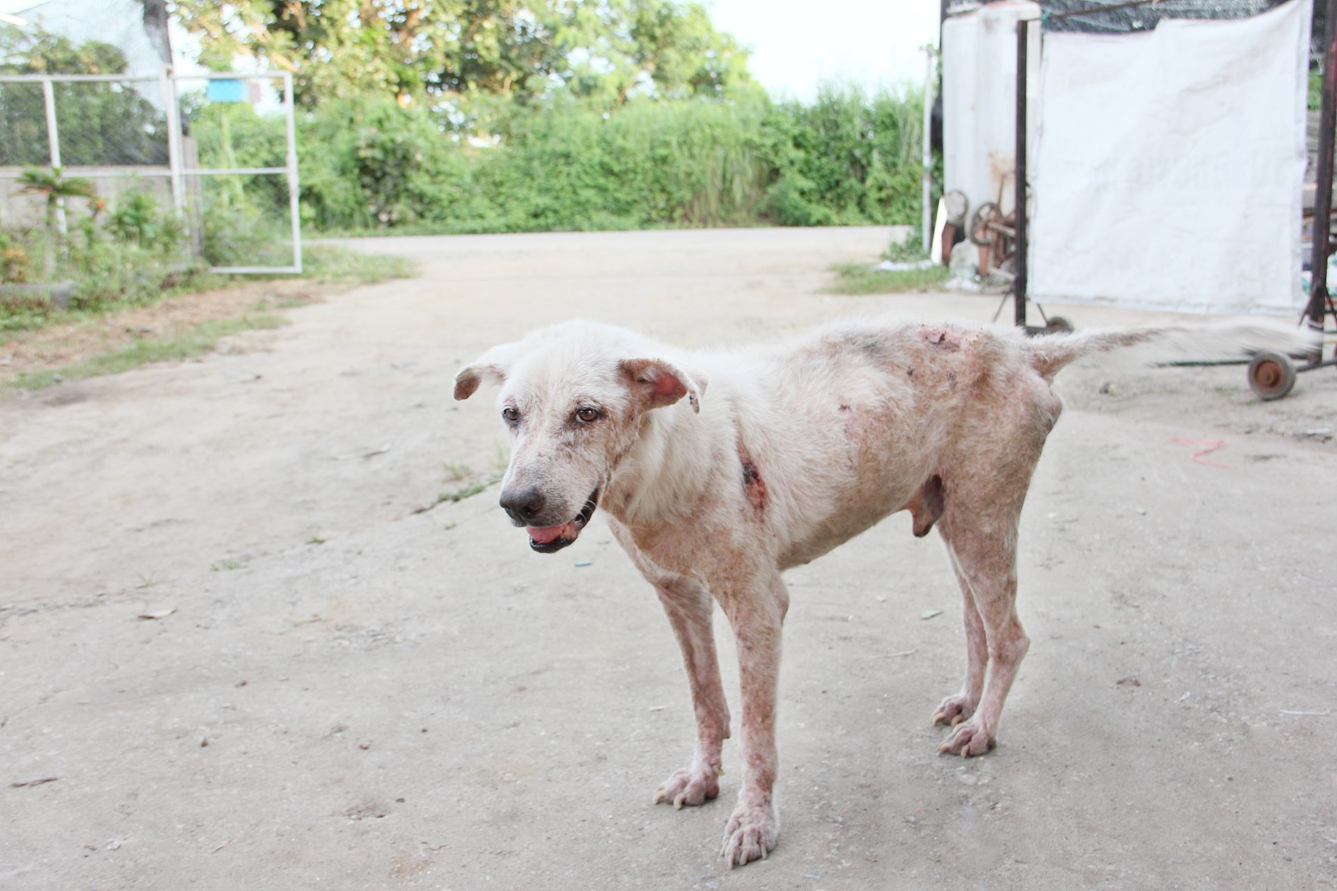 Can You Get Scabies From A Dog?