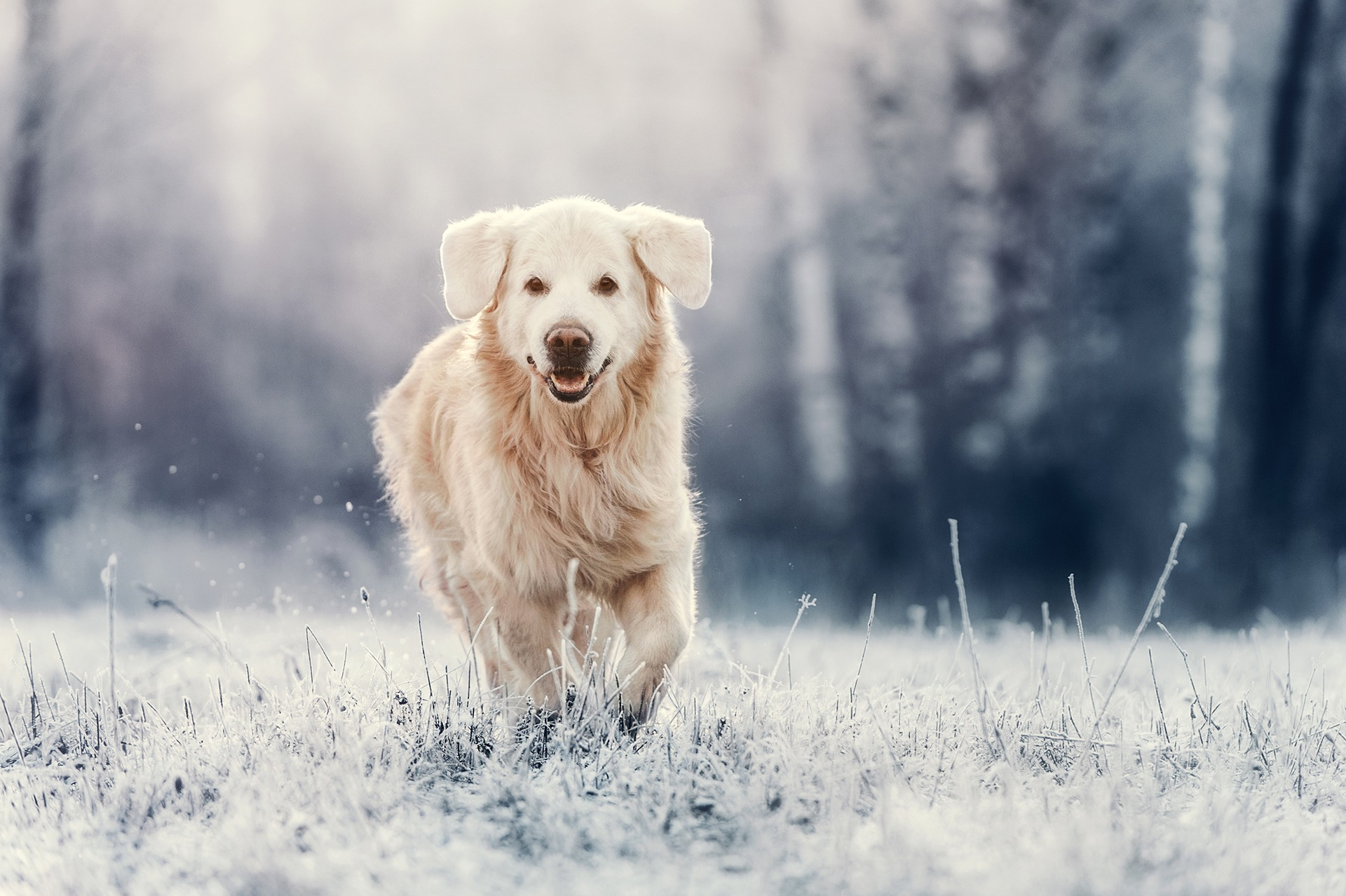 What Temperature Is Too Cold For Dogs?