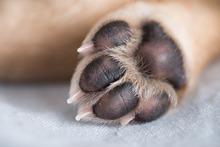 How To Get Rid Of Interdigital Cyst In A Dog