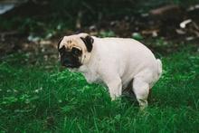 How Often Should A Dog Poop