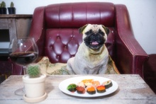 Can Dogs Eat Sushi?