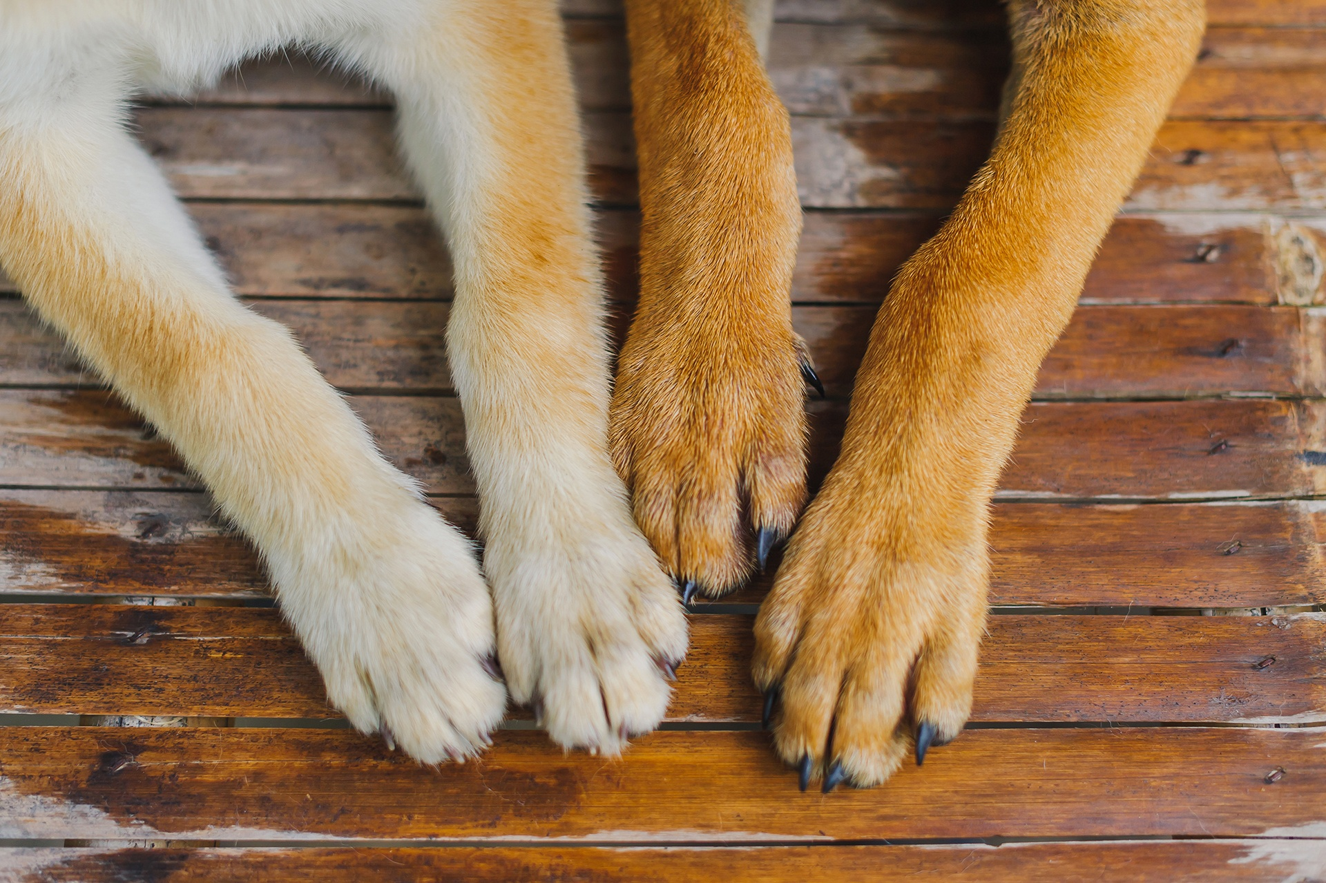 How Long Should Dog Nails Be
